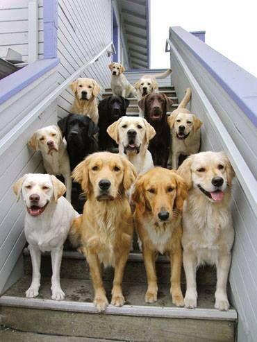 razones para llevar a tu perro al veterinario